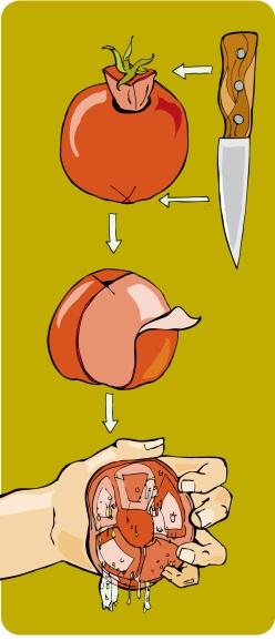preparing the tomato
