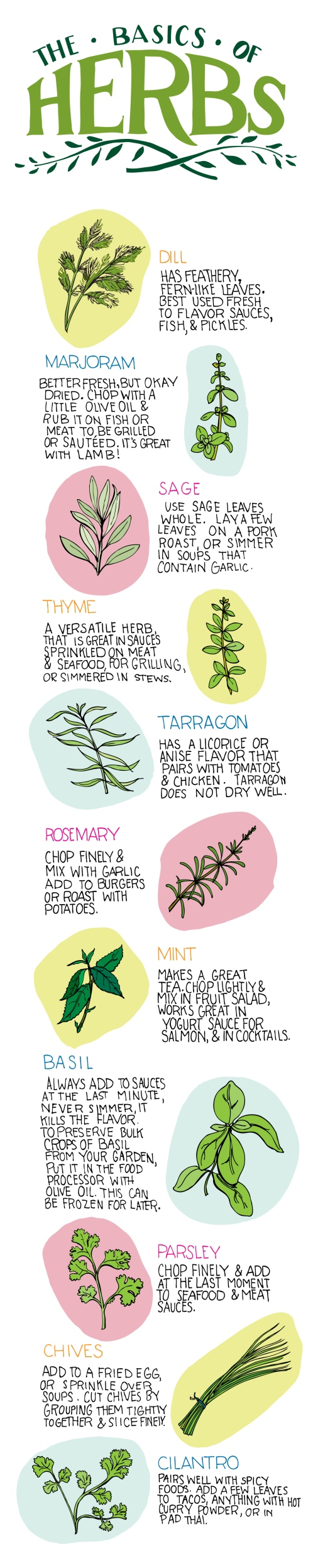 The Basics of Herbs [Illustration] | ecogreenlove