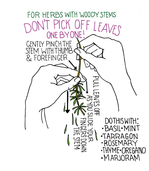 woody stems